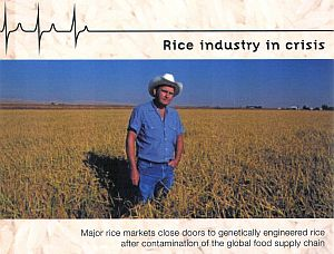 Rice_industry_in_crisis